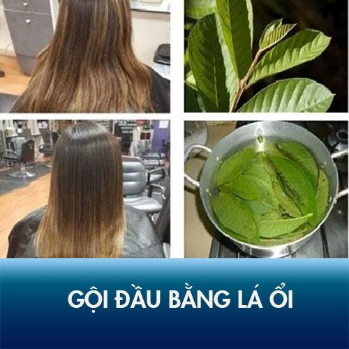 Trị rụng tóc đơn giản với phương pháp gội đầu bằng lá ổi.
